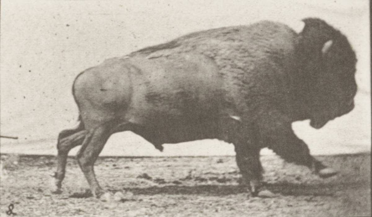 Buffy Sainte-Marie – Now that the buffalo's gone