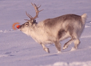 Gene Autry – Rudolph the red nosed reindeer